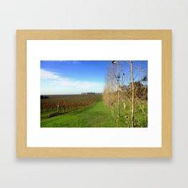 Vine Yards Framed Art Print