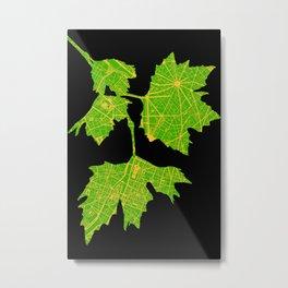 Platanus tree in Paris Metal Print