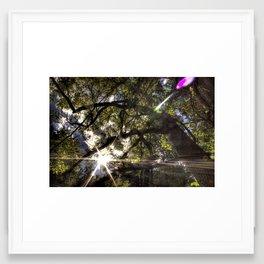 The Sun Through the Trees Framed Art Print