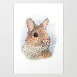 Rabbit 62 Art Print