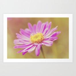 Vintage Aster Flower Art Print