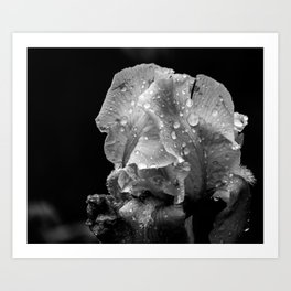 Black And White Flower After The Rain Art Print
