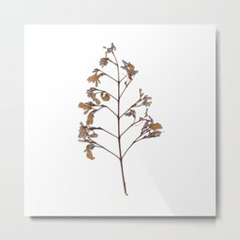 Wild violet and amber flowers Metal Print