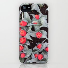 Keukenhof Red 1 iPhone Case