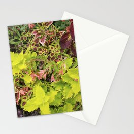 Foliage Fiesta With A Touch Of Begonia Stationery Cards