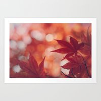 Maple Reds Art Print