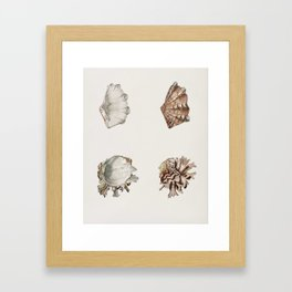 Fluted giant clam and Murex illustrated by Charles Dessalines D' Orbigny (1806-1876) 2 Framed Art Print