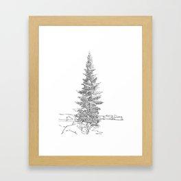North American fir tree  Framed Art Print