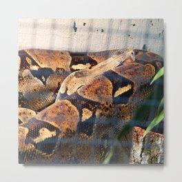 Sleeping Snake Metal Print