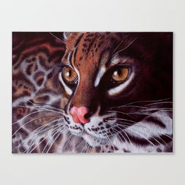 Margay Cat - BIC Ballpoint Pen Canvas Print