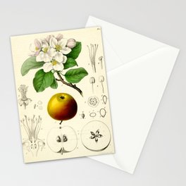 Antique Apple Study Stationery Cards