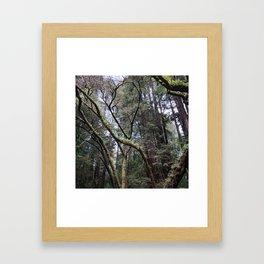 California: Muir Woods Framed Art Print