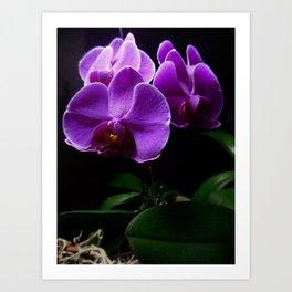 Low Key Orchids Art Print