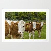 cows Art Prints featuring cows by Annika Erixon