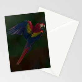 Light and Shadow Scarlet Macaw Stationery Cards
