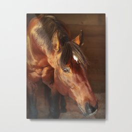 horse collection. in box Metal Print