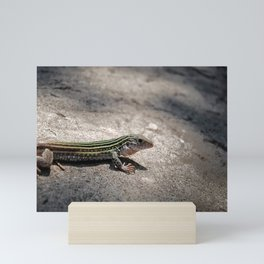 Spotted Whiptail Mini Art Print