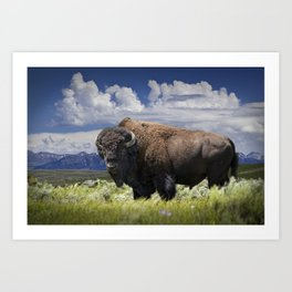American Buffalo Bison by Yellowstone National Park in Montana Art Print