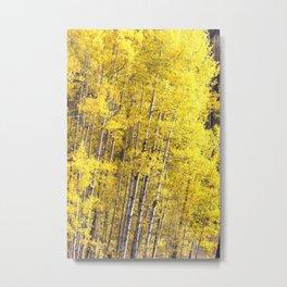 Yellow Grove of Aspens Metal Print