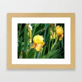 The Amazing Iris Framed Art Print