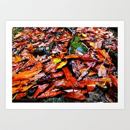Fall, on a Rainy Day. Art Print