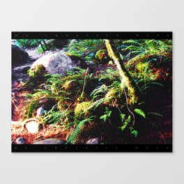 Fern & Rocks Canvas Print