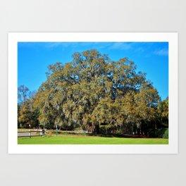 Lovely Oak Art Print