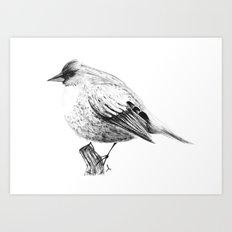 Pajaro Art Print