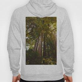 Redwood Forest II Hoody