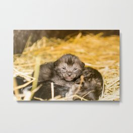 New Born Kittens Metal Print