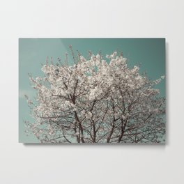 Snow Blossom Metal Print