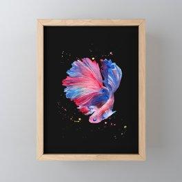 Betta Splendens Fish - Black Background Framed Mini Art Print