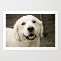 golden retriever Art Prints featuring golden retriever by EdiGraf