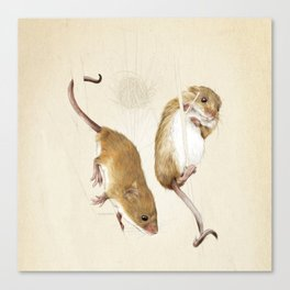 Harvest mice Canvas Print