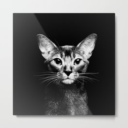 Abyssinian cat portrait black and white Metal Print