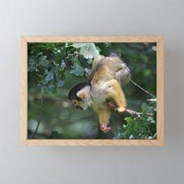 Primate Framed Mini Art Print