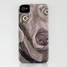 Weimaraner  iPhone (4, 4s) Slim Case