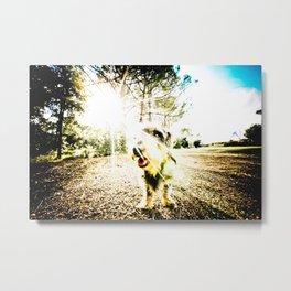 DACKEL DOG #14 Metal Print