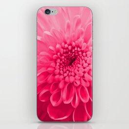 Chrysanthemum pink iPhone Skin