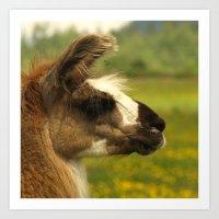 llama Art Prints featuring Llama by Nature In Art...