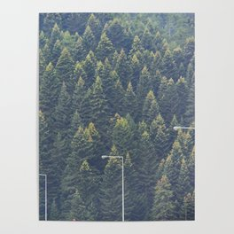 Forest autumn greece Poster