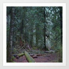 Into the Dark Forest Art Print