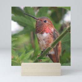 Hummingbird in the Japanese Maple Mini Art Print