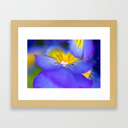 Pansy Abstract Framed Art Print