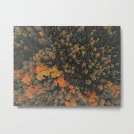Autumn Passage Metal Print