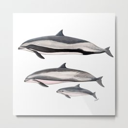 Fraser´s dolphin Metal Print