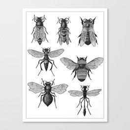 Bees and Wasp Canvas Print