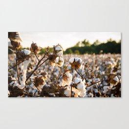 Cotton Field 19 Canvas Print