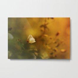 White flowers in the morning light Metal Print