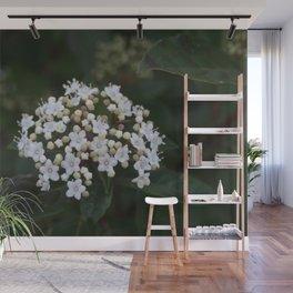 Viburnum tinus flowers and buds Wall Mural